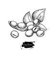 soybean hand drawn isolated vector image vector image