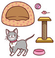 cute kitten and accessories for him a house a vector image