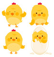 little cute chicks vector image vector image