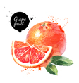 Watercolor hand drawn pink grapefruits Isolated vector image vector image