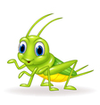 Cartoon cute green cricket isolated vector image vector image
