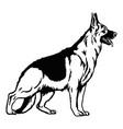 german shepherd dog pose- isolated vector image vector image