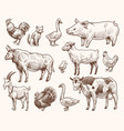 sketch farm animals pig and cat bull and cow vector image