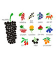collection or colorful isolated berries vector image