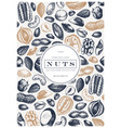 nuts frame design hand drawn pecan macadamia pine vector image vector image