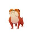 english bulldog dog character vector image vector image