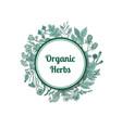 hand drawn medical herbs under circle vector image vector image