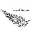 laurel branch sketch vector image vector image