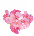 Pink flowers bouquet isolated on white vector image vector image