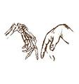 Hand skeleton vector image