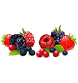 berries isolated vector image