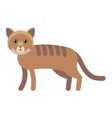 cat flat icon vector image vector image