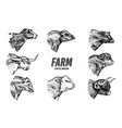 cows set in vintage style cattle heads longhorn vector image vector image