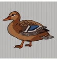 Realistic duck side view vector image vector image