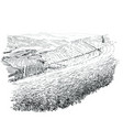 tea plantations ceylon sri lanka vector image vector image