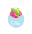 bright raspberry icon vector image vector image