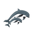 Drawing of Dolphins vector image vector image