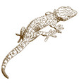 engraving of gecko vector image vector image