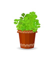 Parsley in a flower pot vector image