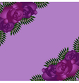 Seamless pattern with purple roses vector image vector image