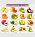 realistic fruit set vector image