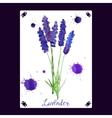 Watercolor lavender bouquet vector image vector image