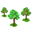 apple tree with green leaves and red fruits set vector image
