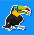 a toucan sticker character vector image vector image
