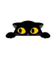 black cute cat is peeking on white background vector image