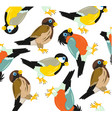 pattern from birds sparrowtomtit and bullfinch vector image vector image