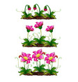 the growth stage fancy pink flower vector image