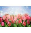 Pink tulips flowers in the garden vector image