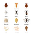 insects parasite vermin nature pest beetle danger vector image