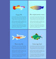 ocean and sea fishes isolated on color backdrops vector image vector image