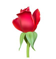 realistic rose bud with stem and leaves closeup vector image vector image