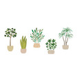 set house indoor plants potted plants vector image