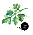 Watercolor hand drawn parsley Isolated organic vector image vector image