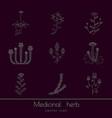 medicinal herbs icons set vector image vector image