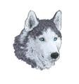 new year 2018 congratulation card husky dog vector image