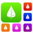poplar leaf set color collection vector image vector image