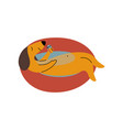 purebred brown dachshund dog floating on vector image