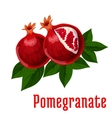 Ripe pomegranate fruits icon for food design vector image