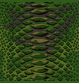 snake skin seamless background flat and solid vector image vector image