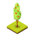 green apple tree isometric 3d icon vector image vector image