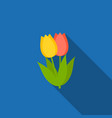 red and yellow tulip icon vector image