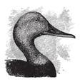 canvas back head vintage vector image vector image