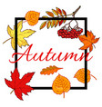 hello autumn hand drawn fall leaves vector image vector image
