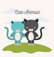 white background with color scene couple cute cats vector image