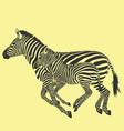 zebra running vector image vector image