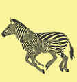 zebra running vector image